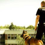 Maître chien: intervention sur plusieurs sites à la fois