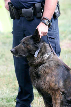 Formation d'agent cynophile metier maitre chien - Agent